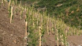 Yuvacık Barajı çevresine 4 bin 500 ağaç