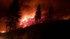 Trabzon'un 10 ayrı ilçesinde aynı anda 22 yangın