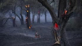 Çanakkale Gelibolu'daki yangın hala söndürülemedi