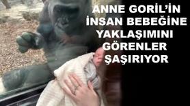 Annelik iç duygusu bütün canlılarda aynı