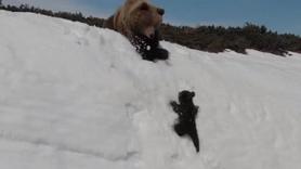 Dünya karlı dağa tırmanan bu yavru ayıyı konuşuyor