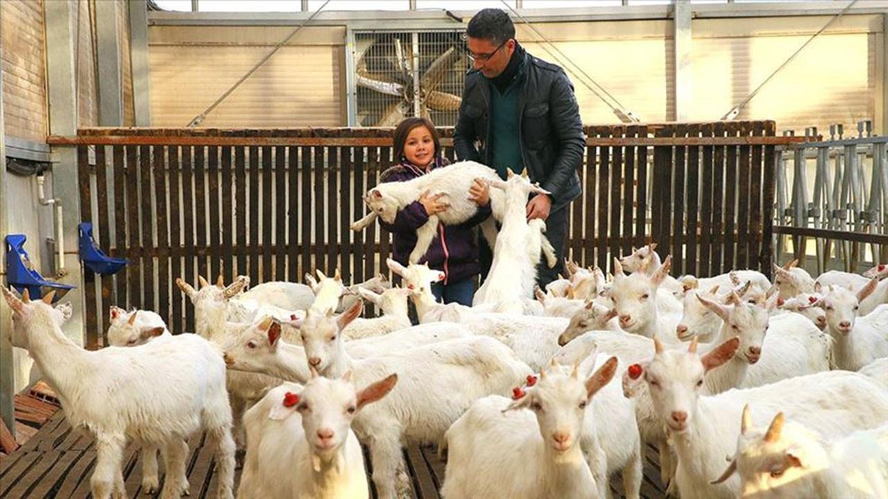 Kızı süt içebilsin diye keçi çiftliği kurdu