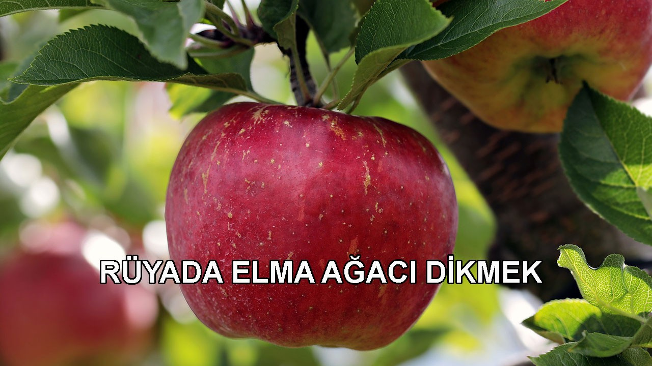 Rüyada elma görmek nimete kavuşmak anlamına gelir