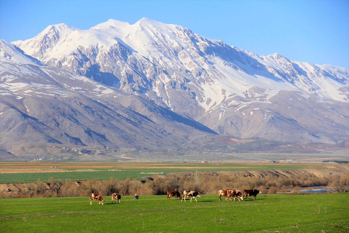 Tunceli Ovacık'ta aynı gün: Ovada inekler, dağda ayılar - Sayfa 2