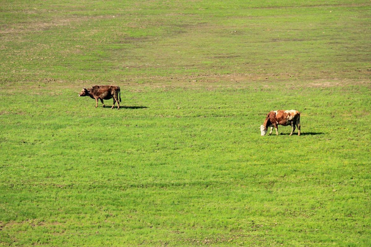 Tunceli Ovacık'ta aynı gün: Ovada inekler, dağda ayılar - Sayfa 3