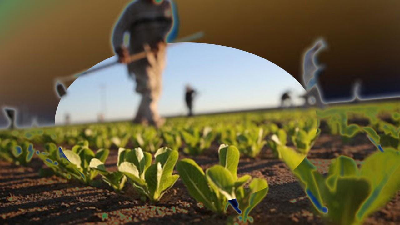 Çiftçilere online eğitim