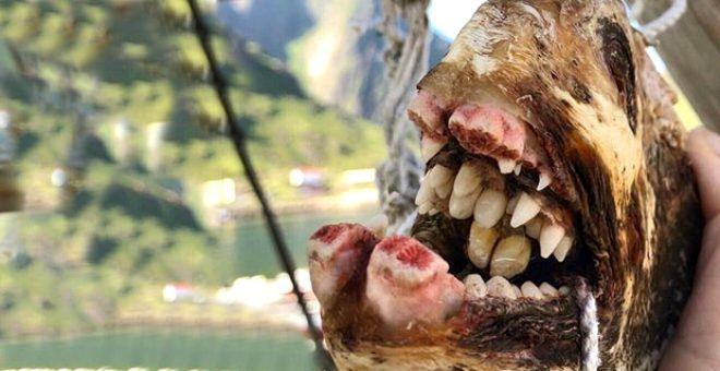 Rus balıkçının ağına takılan tuhaf canlılar - Sayfa 1
