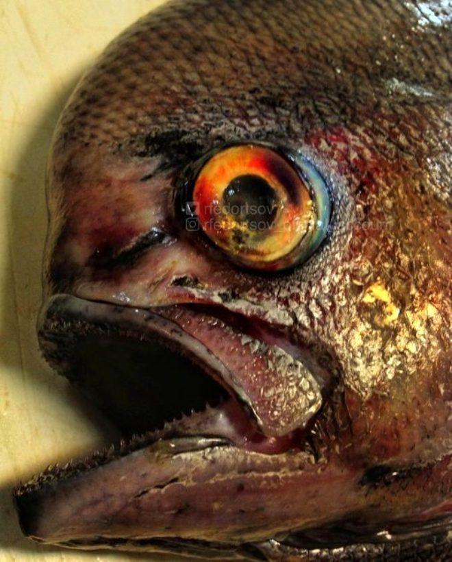Rus balıkçının ağına takılan tuhaf canlılar - Sayfa 2