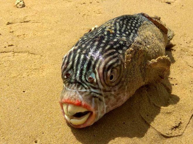 Rus balıkçının ağına takılan tuhaf canlılar - Sayfa 4