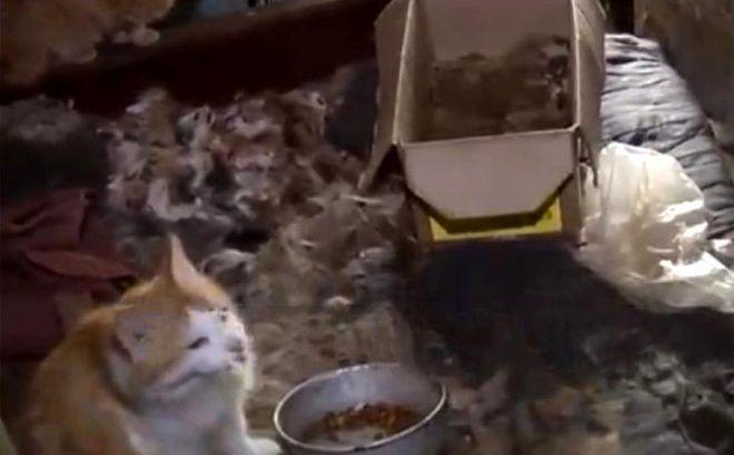 Kızını 26 yıl kedi mamasıyla besledi, 14 yıl duş aldırmadı - Sayfa 3