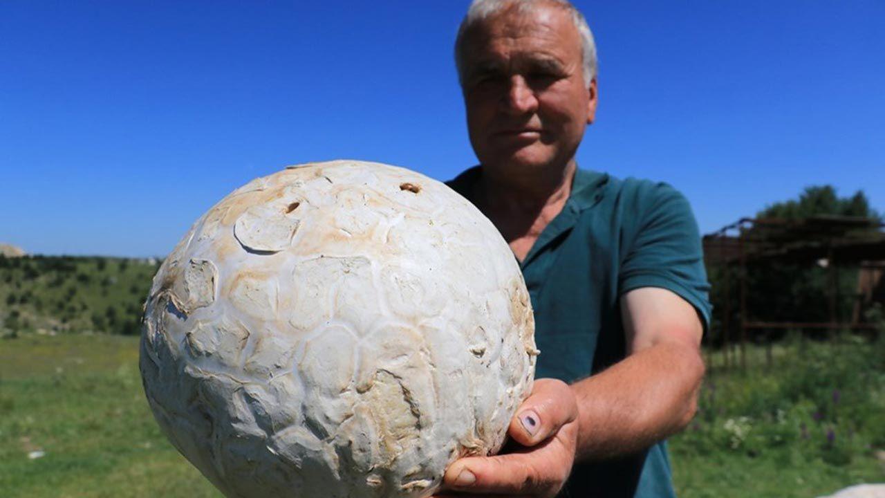 Futbol topu sandı! - Sayfa 2