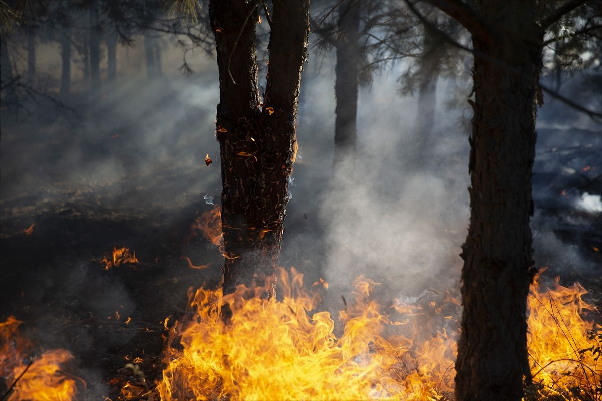 Edirne'de korkutan orman yangını - Sayfa 4