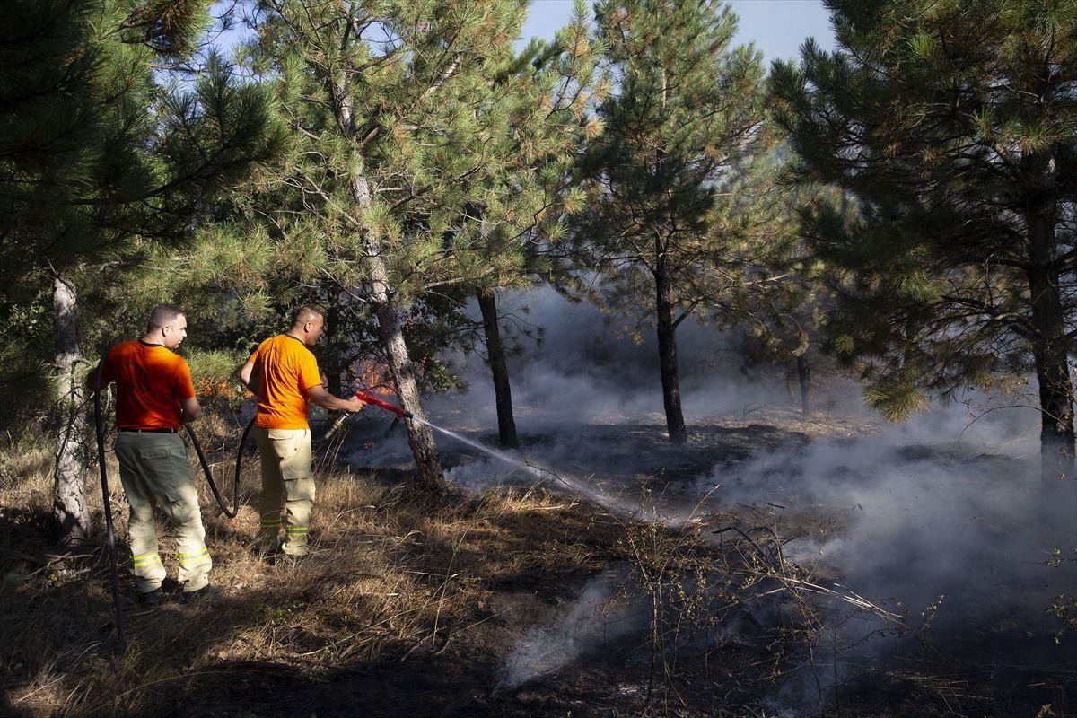 Edirne'de korkutan orman yangını - Sayfa 1