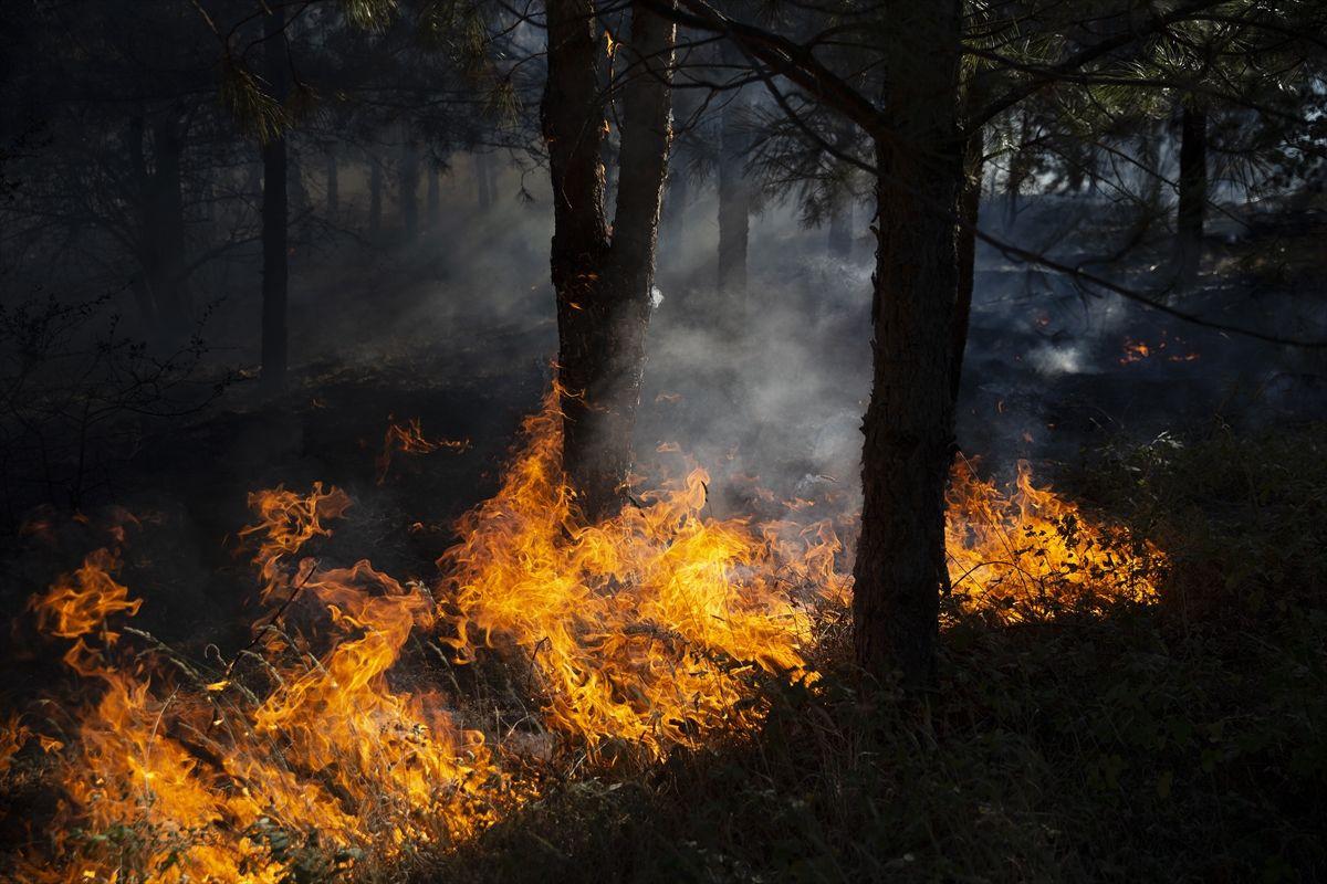 Edirne'de korkutan orman yangını - Sayfa 3