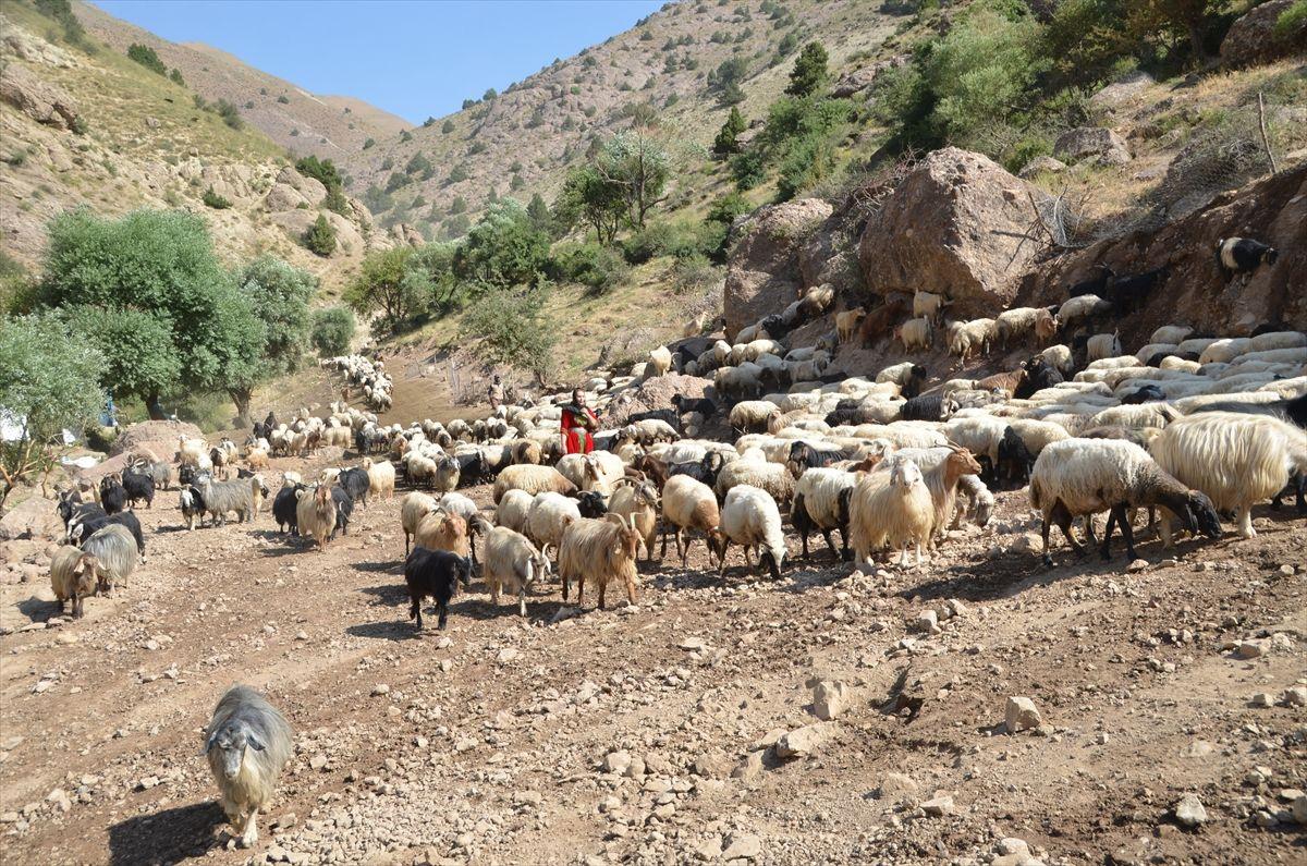 Alime Öğretmen Hakkari'nin dağ köylerinde mutluluğu buldu - Sayfa 1