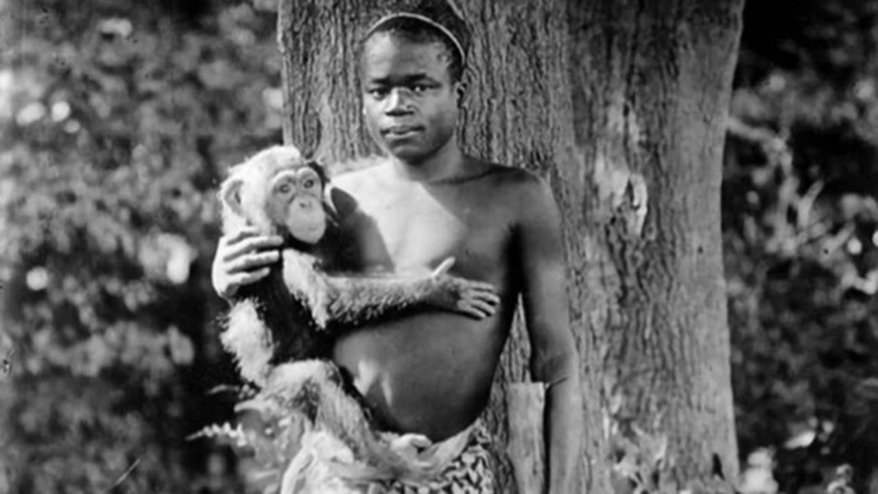 Afrikalı zenciyi maymunlarla birlikte sergilemişti