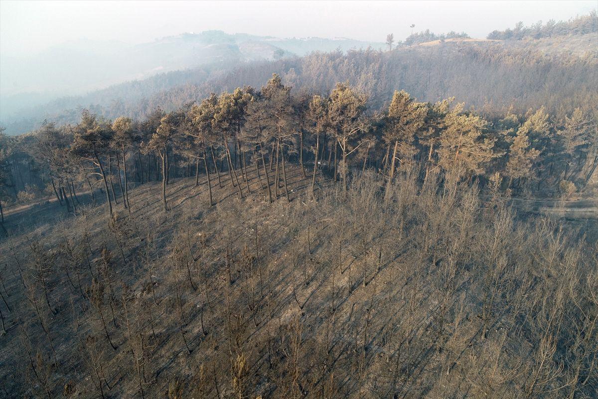 Adana'daki yangınlar 3 gündür söndürülemiyor - Sayfa 2