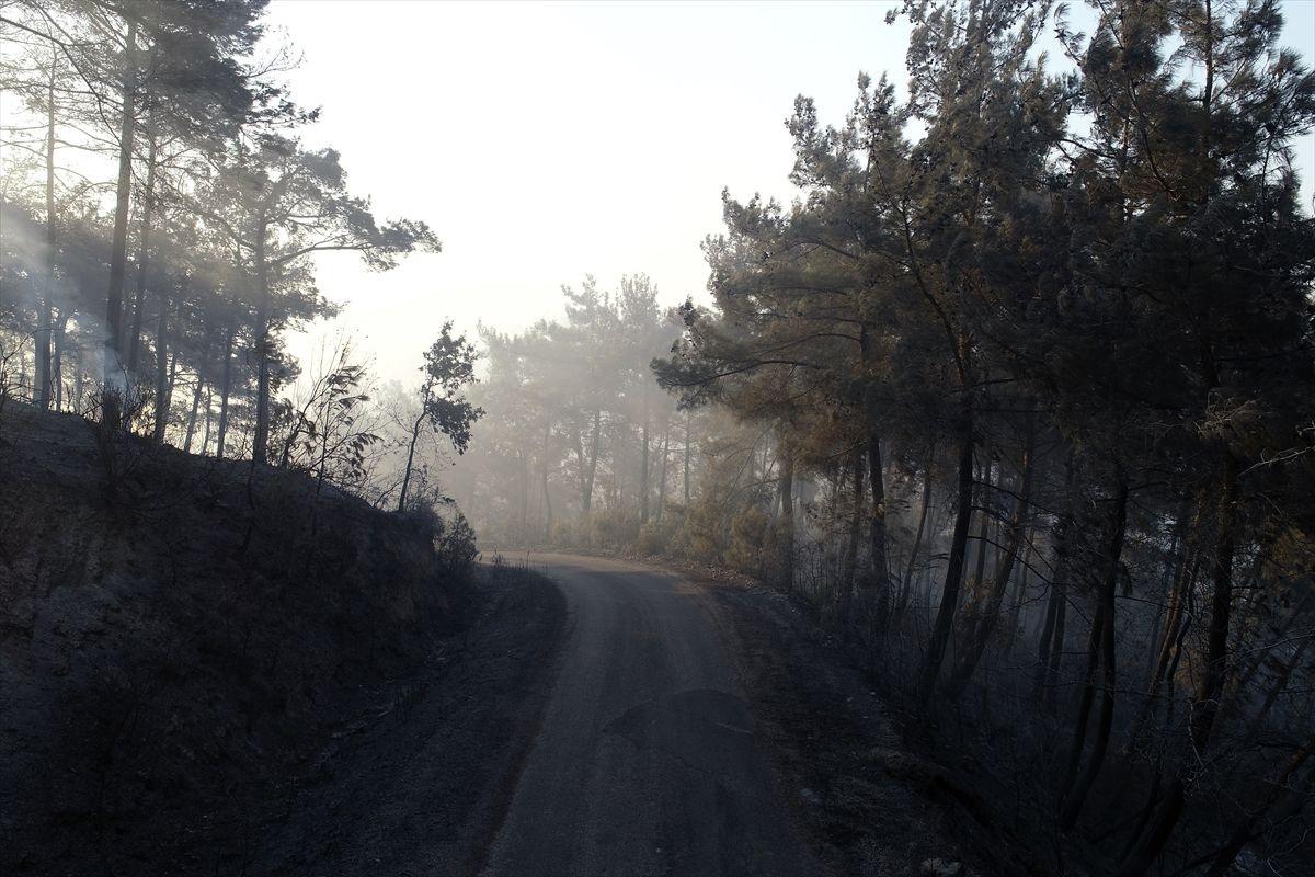 Adana'daki yangınlar 3 gündür söndürülemiyor - Sayfa 1