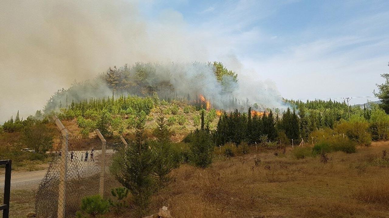 Hatay'dan sonra bir kentte daha orman yangınları