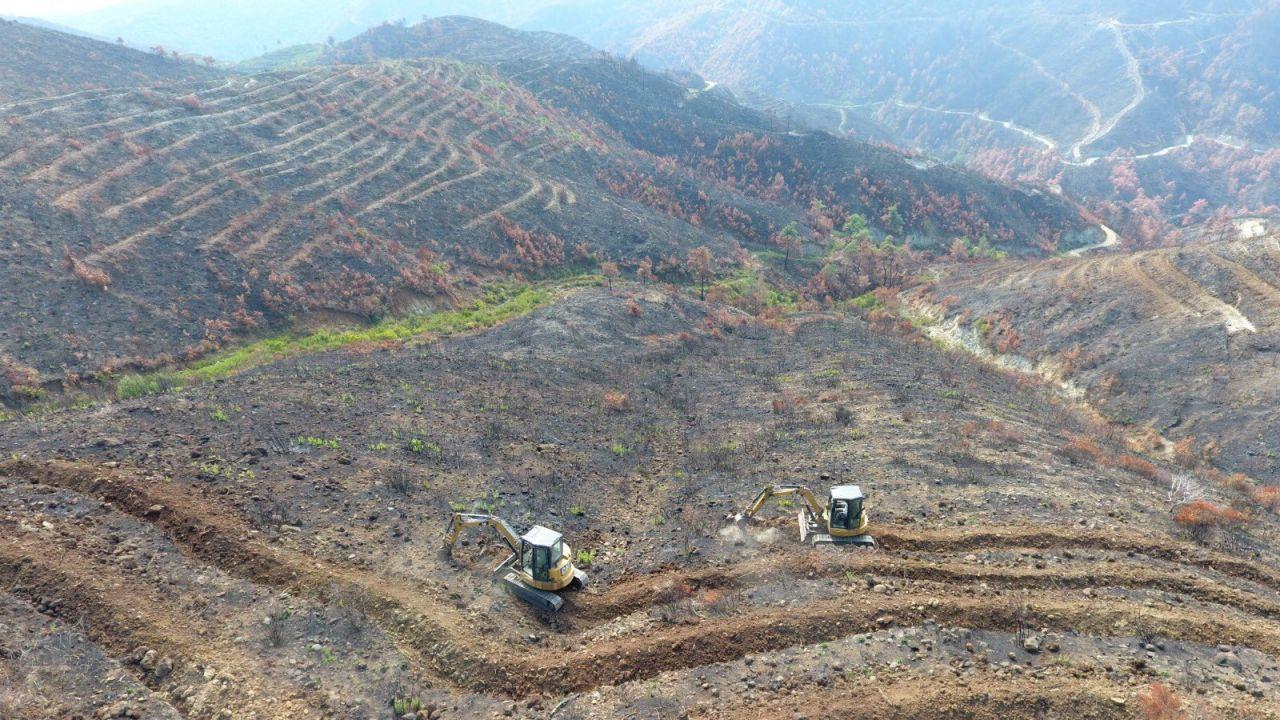 Hatay'da yanan ormanlarda yeşillendirme başladı - Sayfa 3