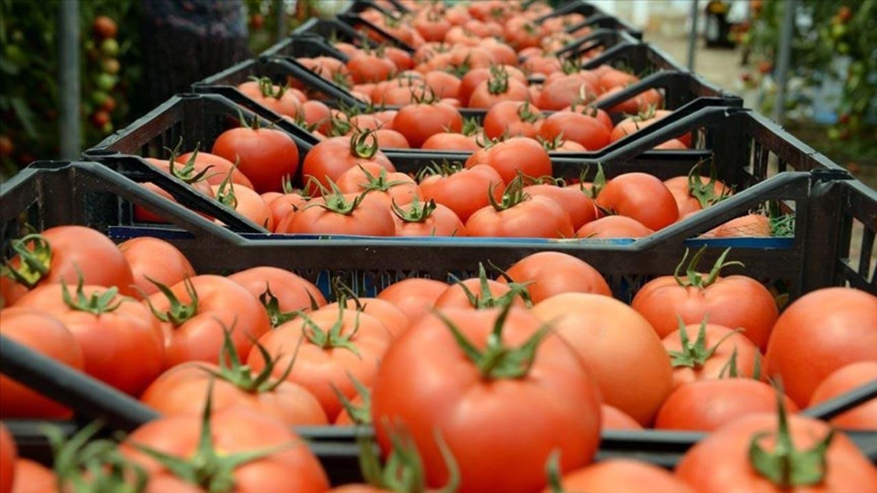 Rusya'dan Türk sebze ihracatçısına müjde