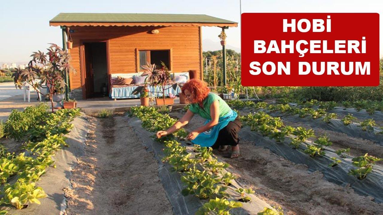 Hobi bahçeleri son durum ne?