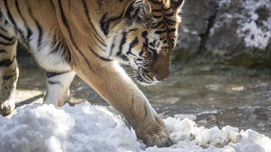 İstanbul'daki Aslan Park'ta kar heyecanı - Sayfa 4