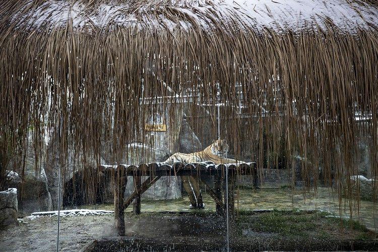 İstanbul'daki Aslan Park'ta kar heyecanı - Sayfa 1