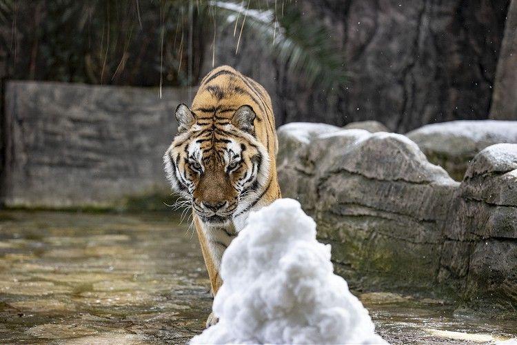 İstanbul'daki Aslan Park'ta kar heyecanı - Sayfa 3