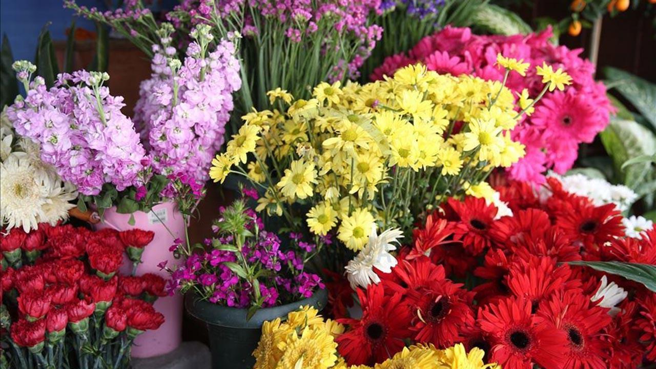 Oksijeni en bol çiçekler ve bitkiler hangisi?