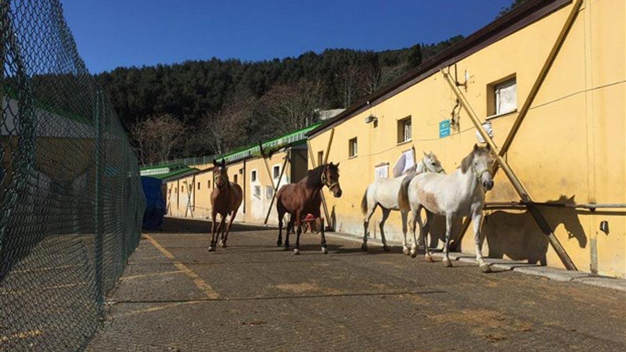 Önce atlar öldü dedi şimdi bakanlığa sorun diyor