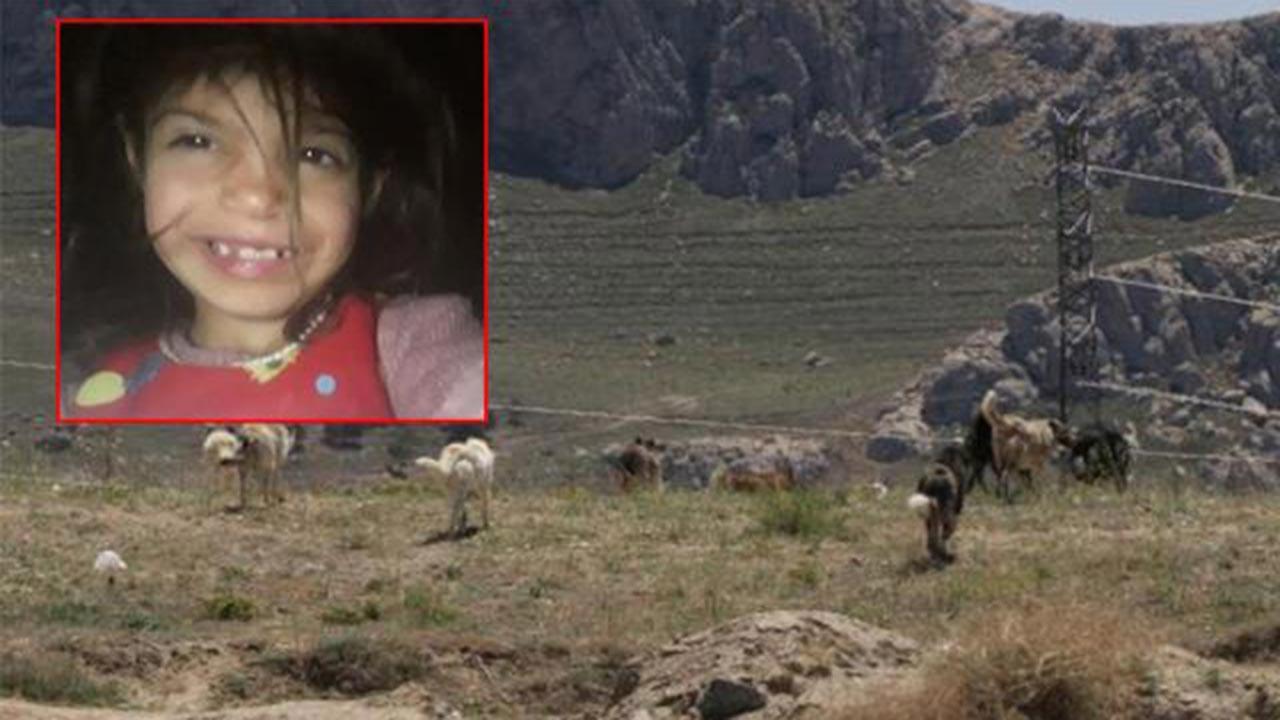 Köpek dehşeti, 6 yaşındaki kız çocuğunu öldürdüler