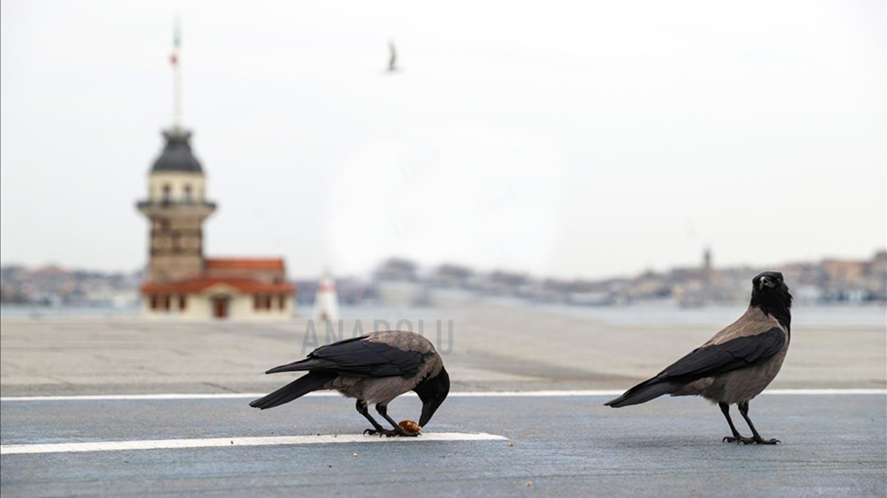 İstanbul'a önemli uyarı, sakın kuşlara dokunmayın