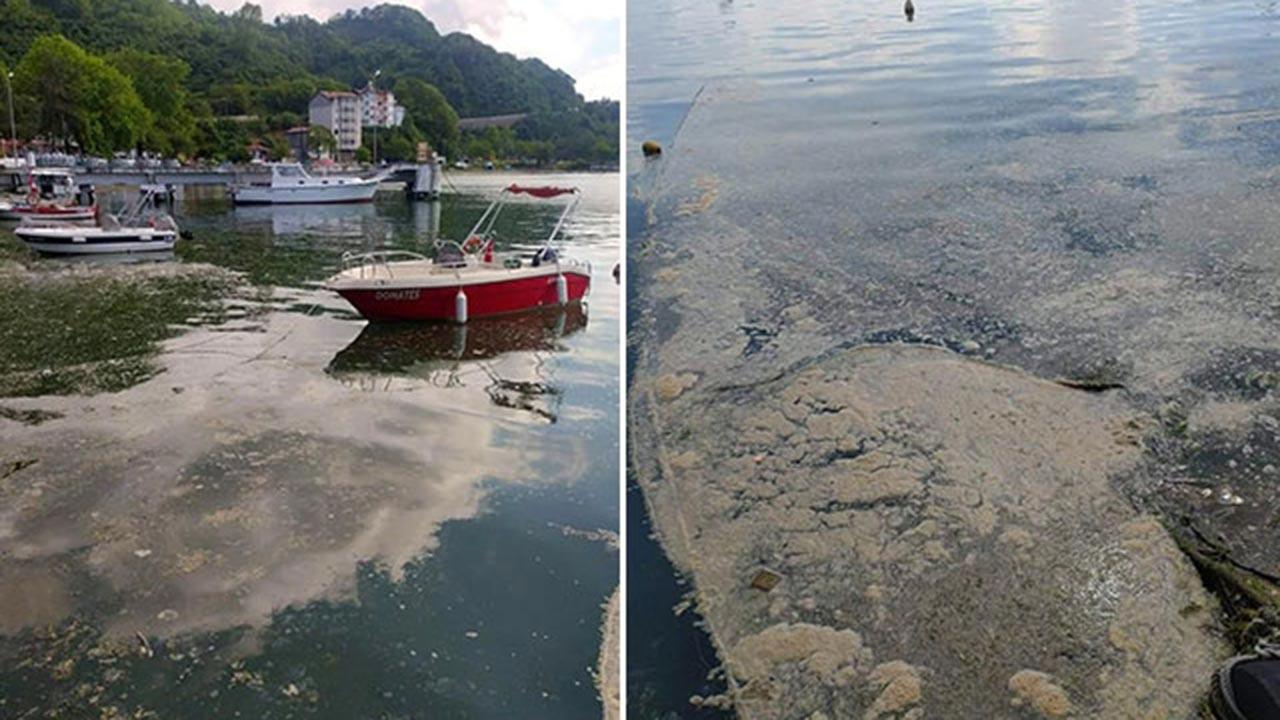 Deniz salyası Karadeniz'e de sıçradı