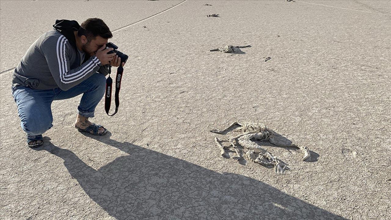 Tuz Gölü'ndeki flamingo ölümleri