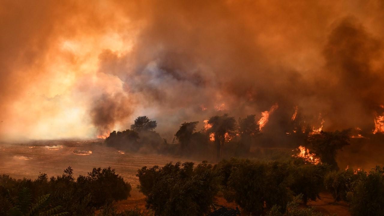 Tarlada başlayan yangın ormanda ilerliyor