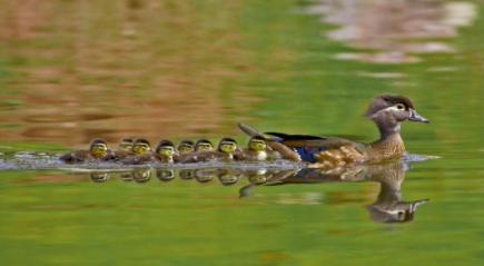 Hayvanlarda anne sevgisini gösteren 15 sıcak fotoğraf