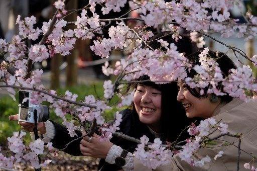 Tokyo'da sakura şöleni