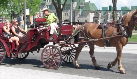 Montreal'deki turistik faytonlar yasaklandı