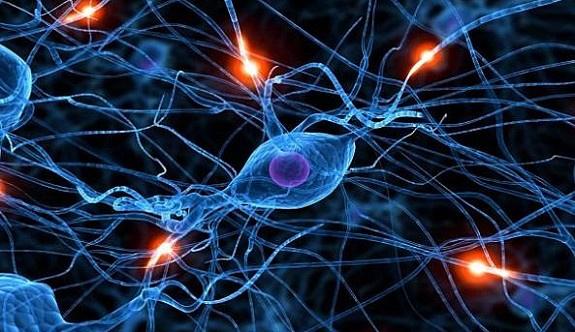 Yapay sinir sistemi geliştirildi