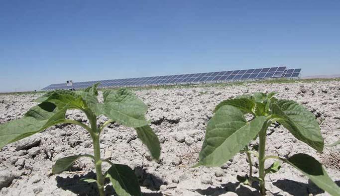Konyalı çiftçiden masrafsız tarıma örnek çözüm