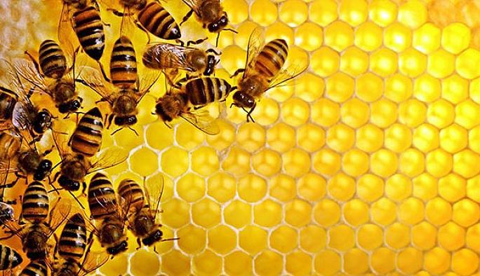 Oruçlulara 'arı ürünleri' tüketimi önerisi