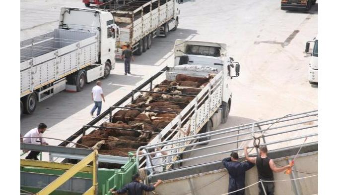 İzmir Körfezi'nde Angus kurtarma operasyonu