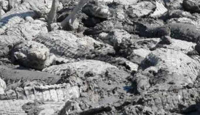 Paraguay'da şiddetli kuraklık hayatı tehdit ediyor