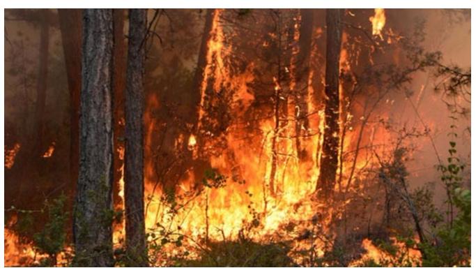 Portekiz'de 3 günde 183 yangın