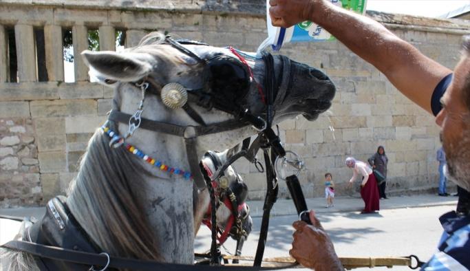 Sıcak havalarda hayvanların su ihtiyacı artıyor