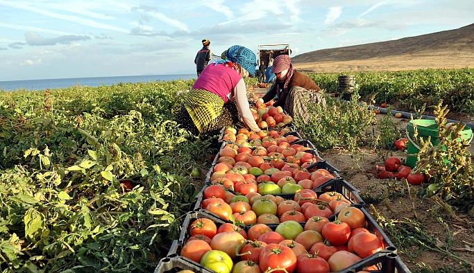 Tarım sektörü Rusya ile gelişmelerden umutlu