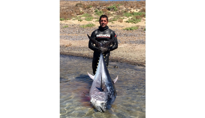 Anadolu insanı zıpkınla 130 kiloluk orkinos avladı