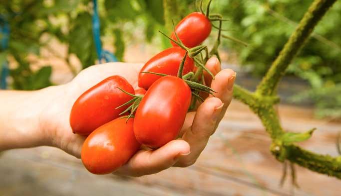 Cilt güzelliği için mucize bitki 'domates'