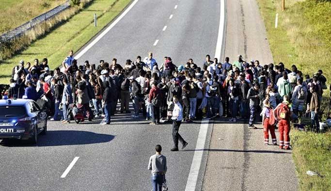 Danimarka'dan insanlık ayıbı